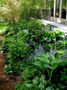 deck garden at Carolyn's Shade Gardens - garden landscaping Shade Garden Plants, Garden Shrubs, Garden Landscaping, Hosta Plants, Landscaping Ideas, Aesthetic Header, Spanish Bluebells, Hosta Gardens, Woodland Garden