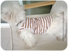 Doggy Clothes