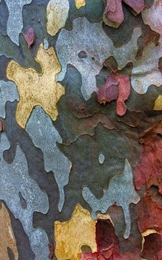 "Alison Holmquist's board ""Tree bark"" shows the amazing variety of patterns in nature. This pin: Anthony Vincent - Sycamore Camo Patterns In Nature, Textures Patterns, Print Patterns, Art Grunge, Foto Macro, Tree Bark, Tree Tree, Nature Artwork, Natural Forms"