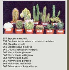 Nombre cactus y sucus – Cactus Types Of Succulents Plants, Cacti And Succulents, Planting Succulents, Planting Flowers, Cactus Names, Succulent Names, Cactus Plante, Pot Plante, Cactus Identification