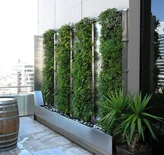 Green Walls for office outdoor areas!