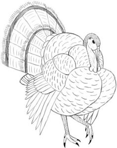 Learn how to draw a turkey, the big, fat bird you love to eat on Thanksgiving. Abstract Coloring Pages, Bird Coloring Pages, Turkey Drawing, Fall Clip Art, Painting Templates, Drawing Course, Chalkboard Drawings, Shrink Art, Air Brush Painting