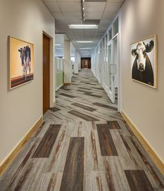 ORGANIC VALLEY: A WORKPLACE FLOORING CASE STUDY