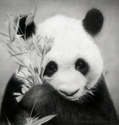 Panda by jonatan alonzo art por jonatanalonzo - animales dib Panda Wallpaper Iphone, Cute Panda Wallpaper, Panda Wallpapers, Bear Wallpaper, Panda Lindo, Animals And Pets, Cute Animals, Black And White Art Drawing, Amor Animal