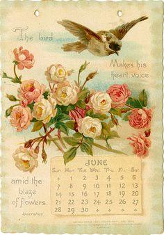 Vintage Greeting Cards, Vintage Ephemera, Vintage Postcards, Vintage Images, Vintage Birds, Vintage Prints, Vintage Art, Season Calendar, Victorian Books