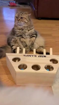 Funny Cat Memes, Funny Cat Videos, Funny Cats, Kitten Videos, Cats Humor, Hilarious, Top Funny, Funny Humor, Cute Animal Videos