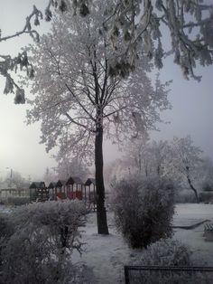 Winter in Brasov 2014