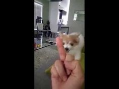 This Dog Hates Getting The Middle Finger, Just Like People!