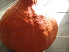 a red kuri squash that I purchased at the North Wind Organic Farm in Bayfield, Wisconsin this past weekend. The flavors of autumn. Creamy Red Kuri Squash Soup is a recipe from Louisa Shafia's Lucid Food:. Red Kuri Squash Soup Recipe, Healthy Eating, Recipes, Food, Eating Healthy, Healthy Nutrition, Clean Foods, Recipies, Essen