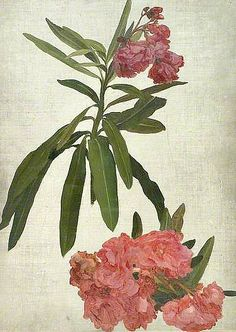 Frederic Leighton / Study of Rhododendron, 1850