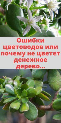 Jade Plants, Small Farm, Good Advice, Indoor Plants, Grass, Garden Container, Gardens, Plants, Growing Plants