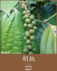 胡椒 - Hújiāo - hồ tiêu - pepper