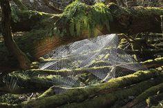 String installations by Sébastien Preschoux via AM on The Present Tense.