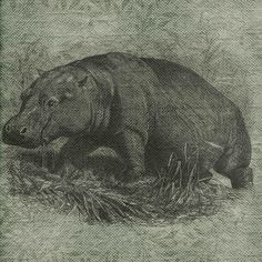 Hey, I found this really awesome Etsy listing at https://www.etsy.com/listing/188841553/vintage-animals-wild-hippopotamus
