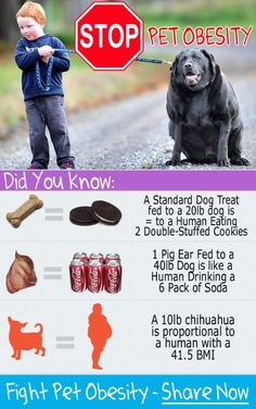 """Pet Obesity is Getting Out of Control. Over 88 Million pets are FAT! Entlebuchers love food and many Entle owners have a hard time distinguishing between """"big boned"""" & """"overweight & fat"""" Vet Med, Vet Clinics, Animal Nutrition, Veterinary Medicine, Pet Health, Health Tips, Health And Safety, Dog Care, Chihuahua"""