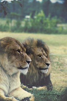 Mr. + Mrs.  LION Flickr