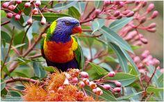 Colorful Parrot Bird Wallpaper   colorful parrot bird wallpaper 1080p, colorful parrot bird wallpaper desktop, colorful parrot bird wallpaper hd, colorful parrot bird wallpaper iphone