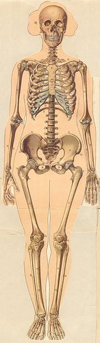 Vintage Female Anatomy Pop Up Book, 1929