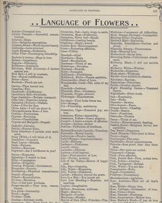 Learn the Victorian Meaning of Flowers + FREE vintage printables! – Bev Rainey Learn the Victorian Meaning of Flowers + FREE vintage printables! The Language of Flowers [free vintage printable] Writing Tips, Writing Prompts, Mock Orange, Flower Meanings, Name Meanings, Plant Meanings, Herb Meanings, Language Of Flowers, No Rain