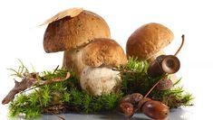Vypěstujte si vlastní houby!