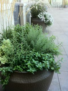 pot with 8 different kinds of herbs