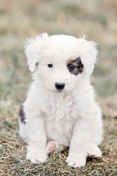 white puppy dog...black eye patch...
