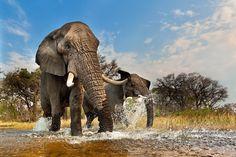 Elefanten - geo.de / © Art Wolfe / artwolfe.com