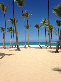 Lovely Caribbean beach. #PalmTrees #PuntaCana #ExcellencePuntaCana