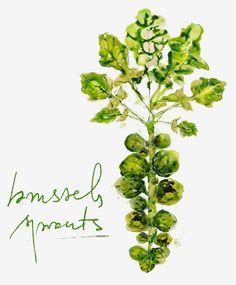 brussels-sprouts-watercolor-illustration-marta-spendowska-verymarta-1a