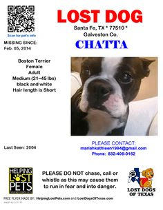 #Galveston #LDOT LOST DOG Chatta 02-05-2014! Galveston Co., Santa Fe (FM2004), TX 77510. Chatta/ Female *** Boston Terrier *** black and white/ Adult/ Medium (21~45 lbs)/ Hair Length is Short/Rescue in Houston TX  CONTACT mariahkathleen1994@gmail.com Phone: 832-406-0162  More Info: http://www.helpinglostpets.com/petdetail/?id=177717  Let's get this dog home! lost dog