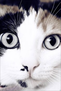 """""""People that hate cats will come back as cats in their next lives."""" --Faith Resnick"""