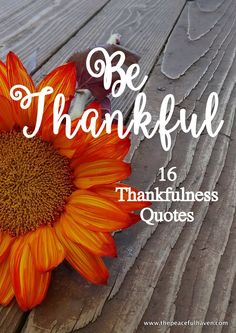 Thankfulness quotes to inspire and delight this Thanksgiving!