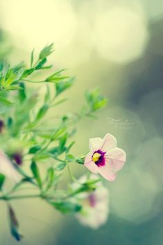 Nourish Your Soul Love Flowers, Beautiful Flowers, Flower Wall, Fine Art Photography, Weed, Bloom, Pretty, Projects, Photos