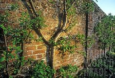 Garden World Images Old Brick Wall, Brick Walls, Garden Doors, Garden Walls, Brick Garden, Old Bricks, World Images, Garden Photos, Tree Wall