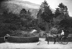 Johan Thesen jr. i den flotte hagen på Alrekstrand omkring 1900. Noen av trærne ble først fjernet i 2014. Foto Olaf Andreas Svanøe. Billedsamlingen, Universitetsbiblioteket  i Bergen.