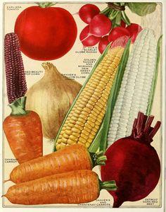 1923 - Vick's garden & floral guide.
