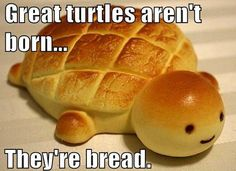 Bread Turtle  19 Puns That Are So Bad, They're Good   Pleated-Jeans.com