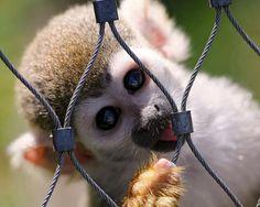 Macacos são super fofos, mas podem transmitir muitas doenças aos humanos.