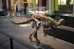 Dysalotosaurus lettowvorbecki
