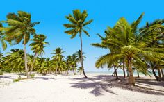 Etelä-Karibian Risteily Costa Magicalla. Yhdistä risteily rantalomaan Dominikaanisessa tasavallassa! www.apollomatkat.fi #Risteily #Dominikaaninen Varanasi, Plants, Planters, Plant, Planting