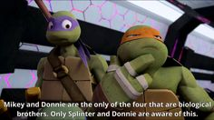 In my fan fiction Leonardo and Venus are biological siblings. In my story Donatello is Japanese, Raphael is Italian,and Michelangelo is Scottish/Irish. Venus and Leonardo are Dutch.