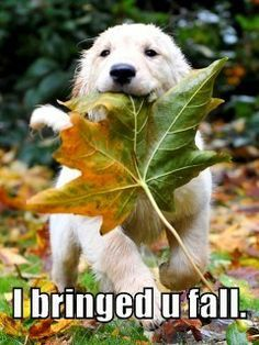 puppy in leaves - Google Search