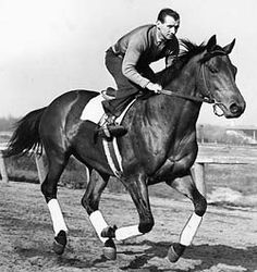 SEABISCUIT (USA).  Winner of 33 races from 89 starts with another 16 placings, the unattractive (by thoroughbred standards) horse proved a giant on the racetrack. A grandson of Man o' War, his most famous race was that with the most elite son of Man o' War in WAR ADMIRAL, which he won by four lengths in November 1938 at Pimlico.