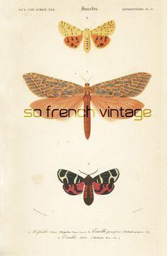 1861 Papillons Orbigny, Planche Originale, Couleurs peintes à la main, Histoire Naturelle, Entomologie 19ème siècle, Lithographie cadeau de la boutique sofrenchvintage sur Etsy