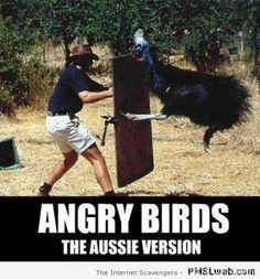 55-angry-birds-the-Aussie-version.jpg (450×483)
