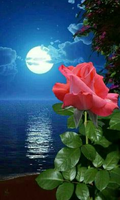 Rose Under Lotus Moon - Diamond Painting Kit Moon Images, Moon Pictures, Nature Pictures, Beautiful Pictures, Beautiful Moon, Beautiful Roses, Beautiful Flowers, Moon Rise, Stars And Moon
