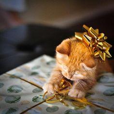 Gilded Kitty