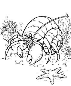 Eric Carle Coloring Pages: These Eric Carle coloring sheets will stimulate the children's intellectual growth, inquisitiveness and creativity.