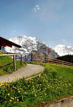 Hike from Murren to Gimmewald    flowers-Switzerland   Flickr - Photo Sharing!