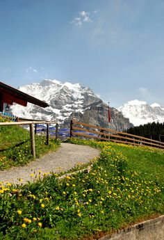 Hike from Murren to Gimmewald flowers-Switzerland | Flickr - Photo Sharing!